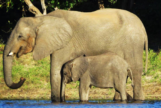 AfricaResized/033_Elephant_and_Baby.jpg